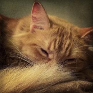 Peach Cat-astrophie!